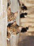 коты симпатичные стоковое изображение