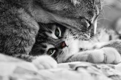 коты сладостные Стоковые Изображения RF