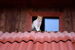 коты смешные стоковая фотография