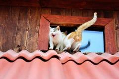 коты смешные стоковые фото