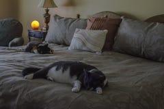 Коты спать и гималайская лампа соли стоковое фото