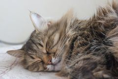 коты спать на кровати Стоковое фото RF