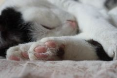 коты спать на кровати Стоковое Изображение