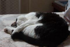коты спать на кровати Стоковые Изображения RF