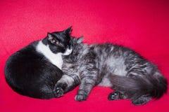 Коты спать Стоковые Фотографии RF