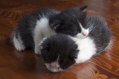 Коты спать Стоковое Изображение RF