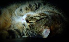 Коты спят до 16 часов день, иногда вверх и вниз и этот один с одним глазом открытым стоковые фото