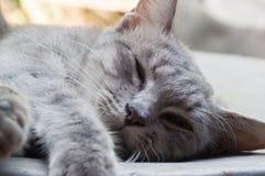 Коты спят стоковая фотография rf