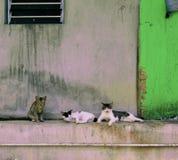 Коты страны lazing вокруг дома в деревне Стоковая Фотография