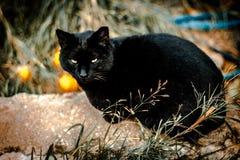 коты улицы, кот, черный кот, Стоковые Фото