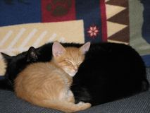 коты 1 уютные греют Стоковые Изображения