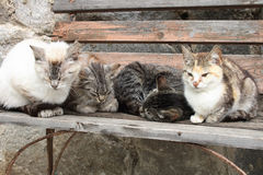 коты Стоковые Фото
