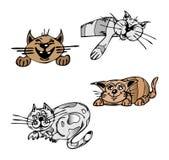 коты Стоковое Изображение RF