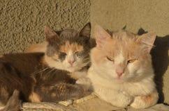 коты 2 стоковая фотография rf
