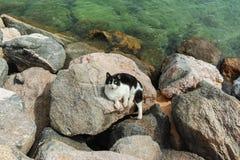 Коты Eilat, Израиля Много котов выходят на улицы и пляжи  стоковые фото