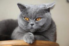коты lisa mona Стоковые Фотографии RF