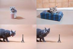 Котята британцев Shorthair и путешествие Eiffel, Париж, multicam Стоковые Изображения RF