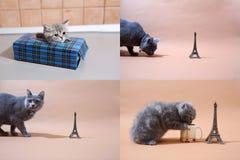 Котята британцев Shorthair и путешествие Eiffel, Париж, multicam Стоковое Изображение