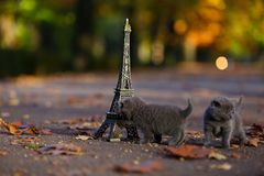 Котята британцев Shorthair и путешествие Eiffel Стоковая Фотография