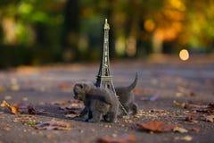 Котята британцев Shorthair и путешествие Eiffel Стоковое Изображение RF