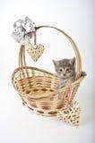 Котята в корзине с сердцами Стоковое Изображение