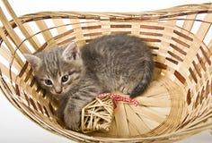 Котята в корзине с сердцами Стоковое фото RF