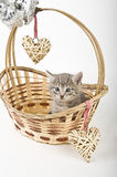 Котята в корзине с сердцами Стоковые Фото