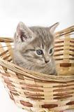 Котята в корзине Стоковые Фотографии RF