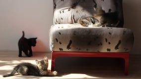 Котята играя и воюя один другого видеоматериал
