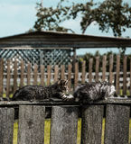 Котята играя на загородке Стоковая Фотография