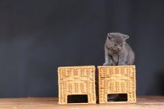 Котята играя на некоторых деревянных клетях Стоковое фото RF