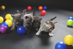 Котята играя шарики стоковая фотография rf