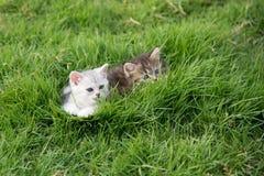 котята играя 2 Стоковые Фото