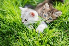 котята играя 2 Стоковые Изображения RF