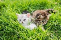 котята играя 2 Стоковое фото RF