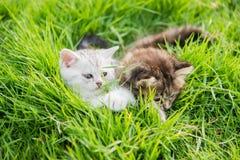 котята играя 2 Стоковое Изображение RF
