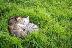 котята играя 2 Стоковое Фото