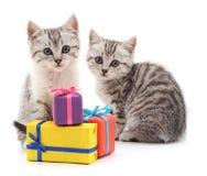 Котята и подарки стоковое изображение