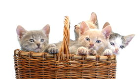 котята корзины немногая сток-видео