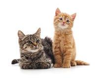 котята малые 2 стоковые фото