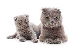 котята малые 2 стоковое изображение