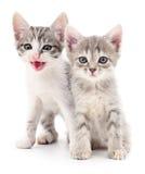 котята малые 2 Стоковая Фотография RF