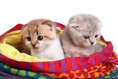 котята мешка сидят стоковые изображения