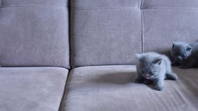 Котята на кресле акции видеоматериалы