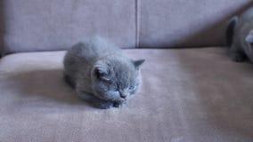 Котята на кресле видеоматериал