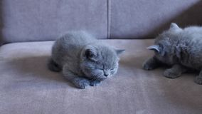 Котята на кресле сток-видео