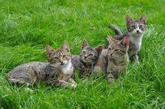 Котята на траве Стоковые Фото