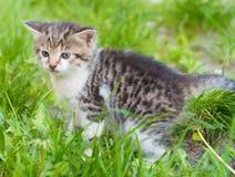 котята немногая Стоковое Изображение