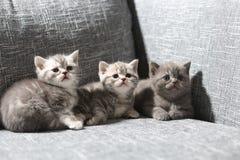 котята немногая 3 Стоковые Фотографии RF