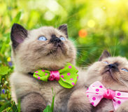 котята немногая 2 Стоковое Изображение
